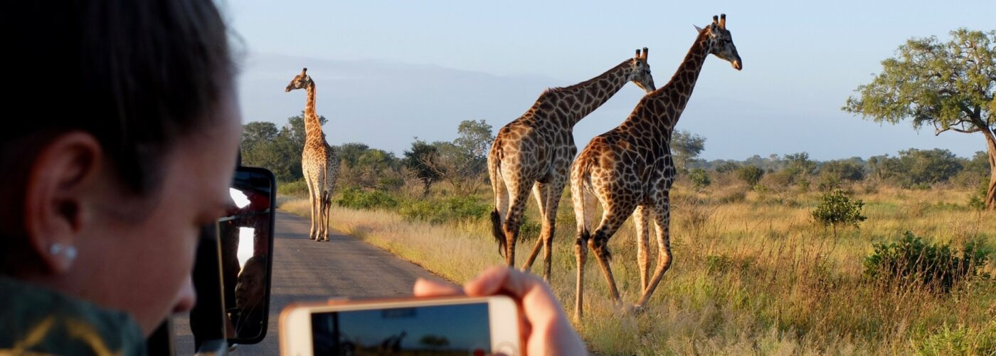 woman taking photo of giraffe out of a safari vehicle.