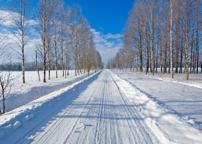 winter snowy road with trees
