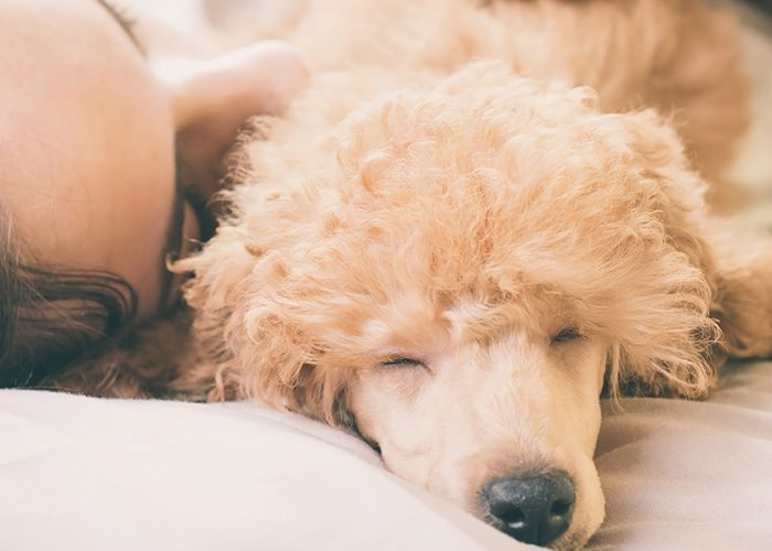 11 Pet-Friendly Hotels Your Dog (and You) Will Love