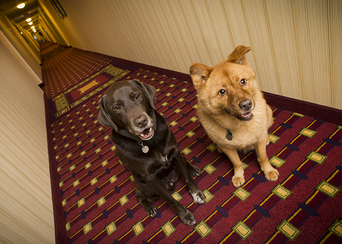 11 Pet Friendly Hotels Your Dog And You Will Love Smartertravel