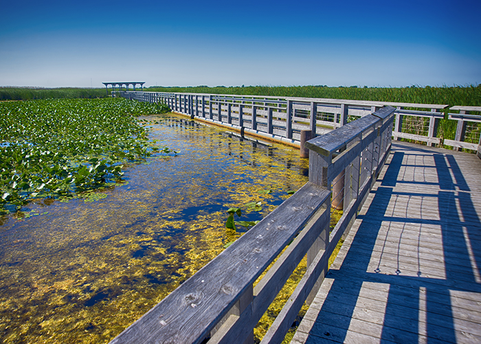 boardwalk point pelee national park