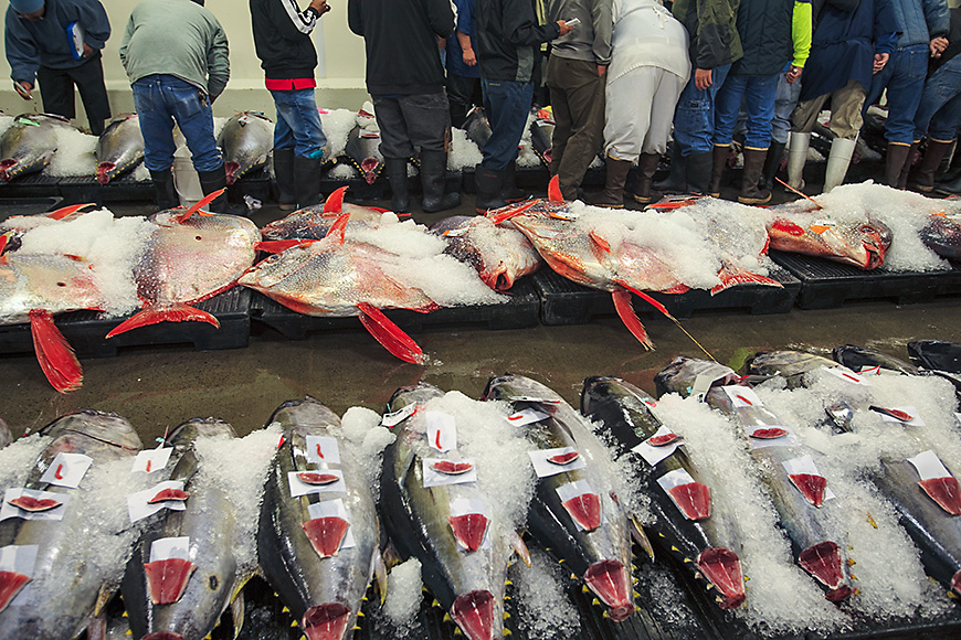 Fresh fish at the daily market auction honolulu harbor, hawaii