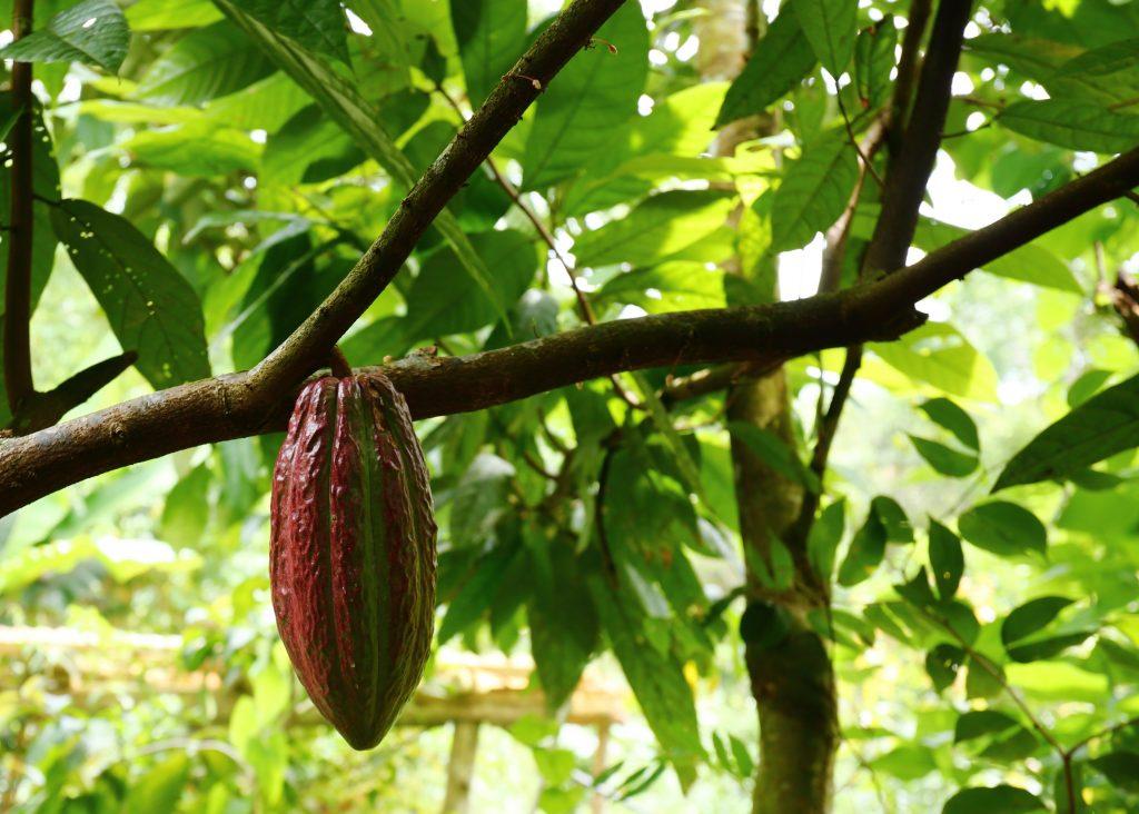 Chocolate Tour Costa Rica Arenal