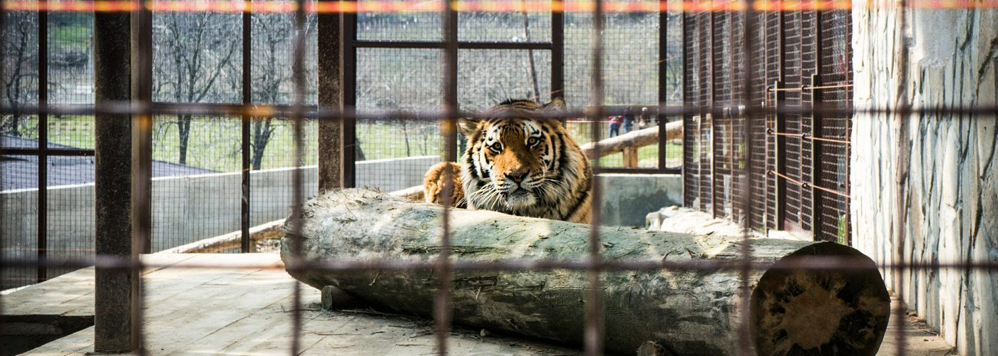 How to Spot Animal Cruelty While Traveling