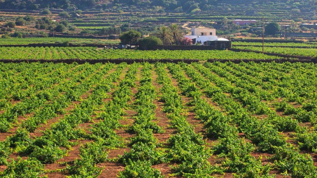 pantelleria italy