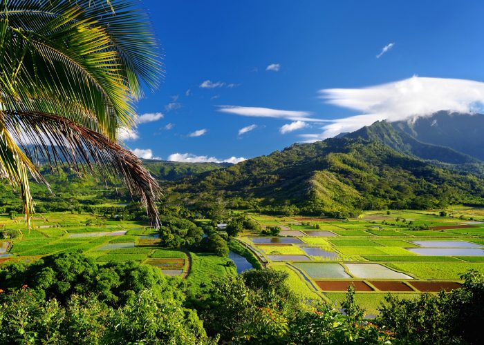 hawaii taro fields hanalei