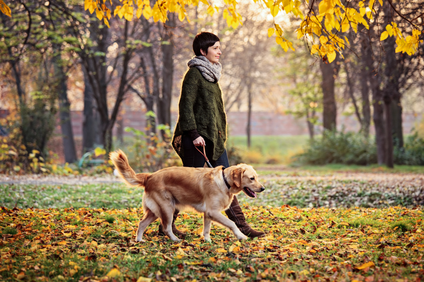 woman talking dog for a wlak autumn