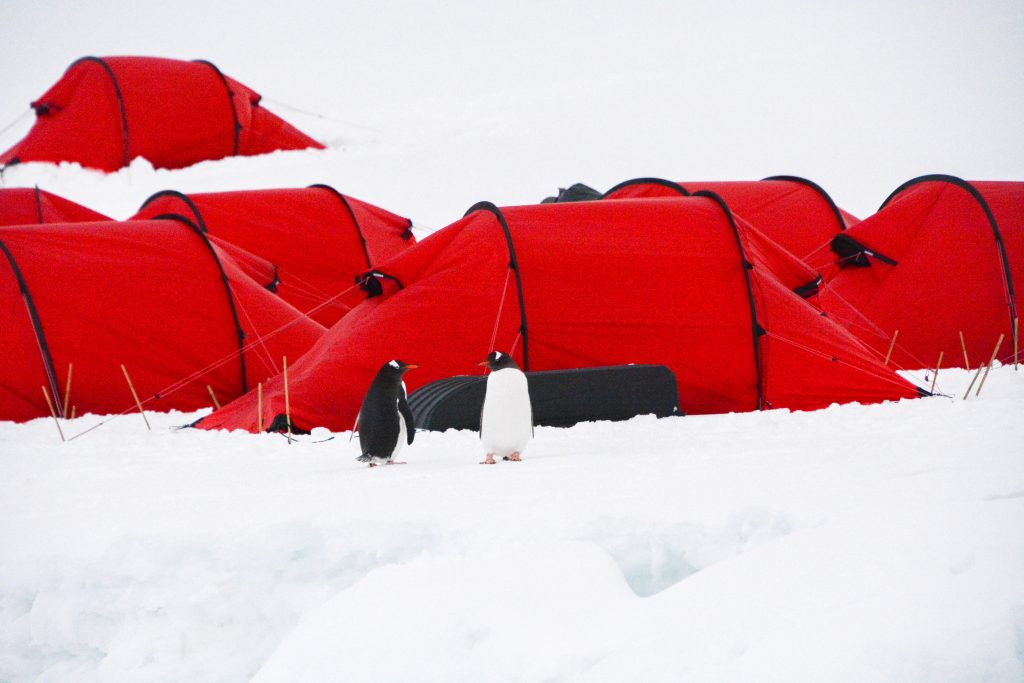Penguins standing outside tents in antarctica