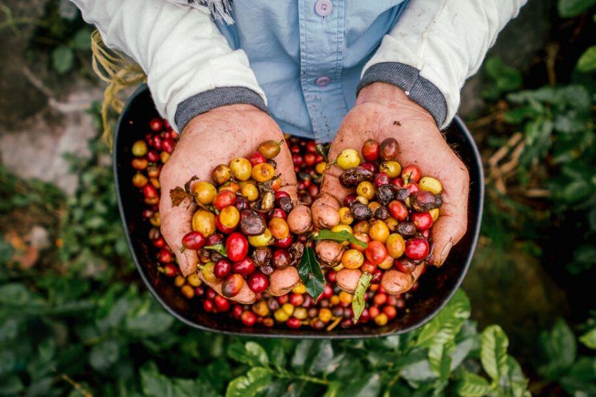 colombian coffee REI adventures.
