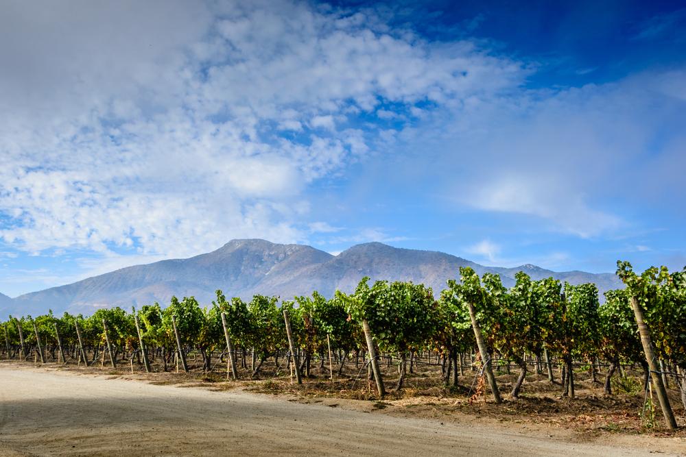 chilean-wine-region-casablanca