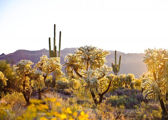sonora desert arizona