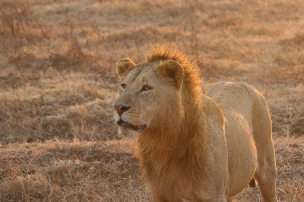 G adventures tanzania active safari