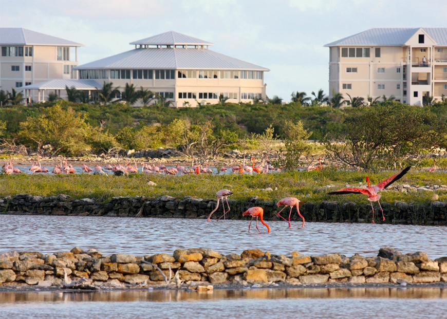 east bay resort flamingos