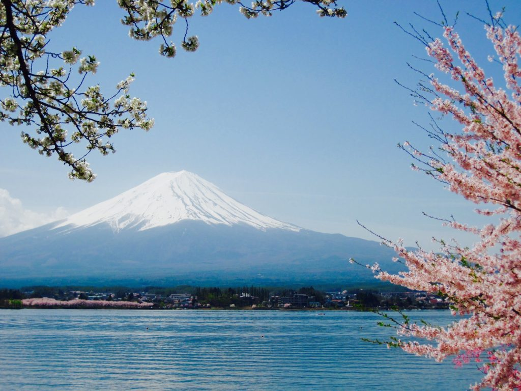 mt-fuji-with-omnipresent-cherry-blossoms-around