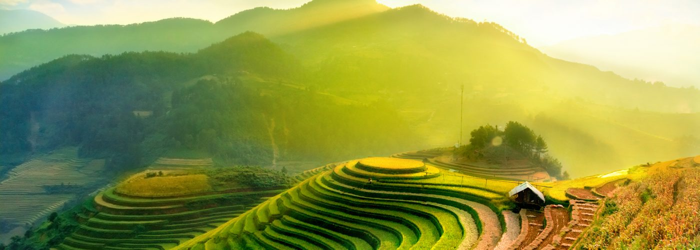 Terraced rice fields in YenBai, Vietnam