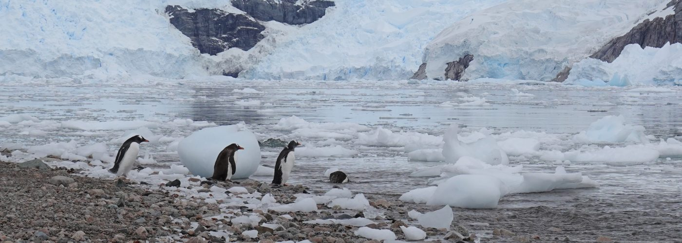Antarctica Penguins and Ice