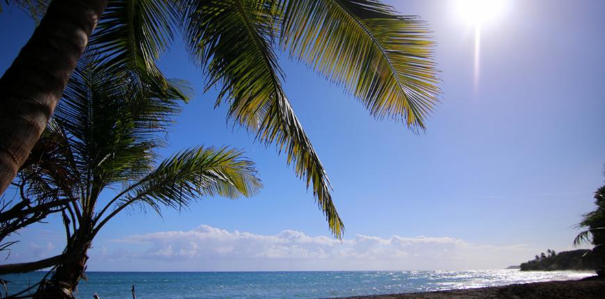 Palm trees black sand beach vieques puerto rico