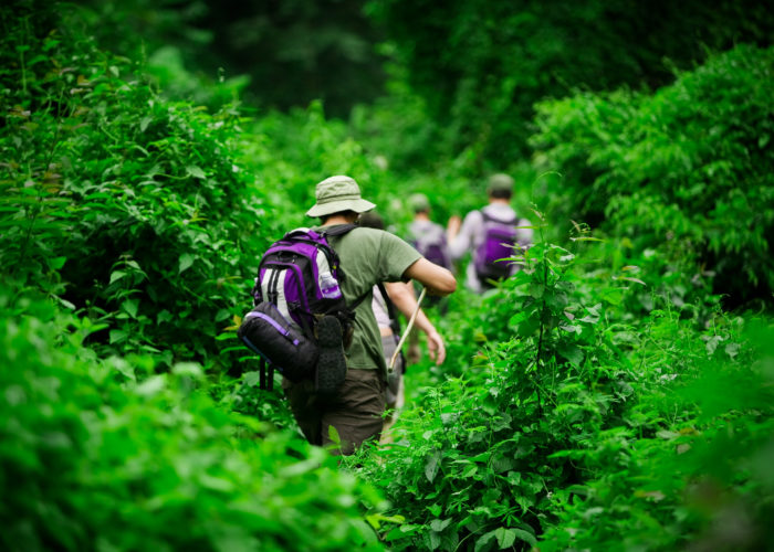 Three hikers trekking through thick, green forest growth