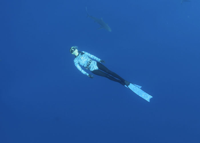 marine biologist swimming with sharks.