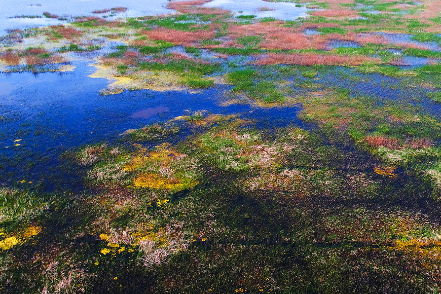 Migratory bird sanctuaries along the coast of yellow sea-bohai gulf china (phase i)