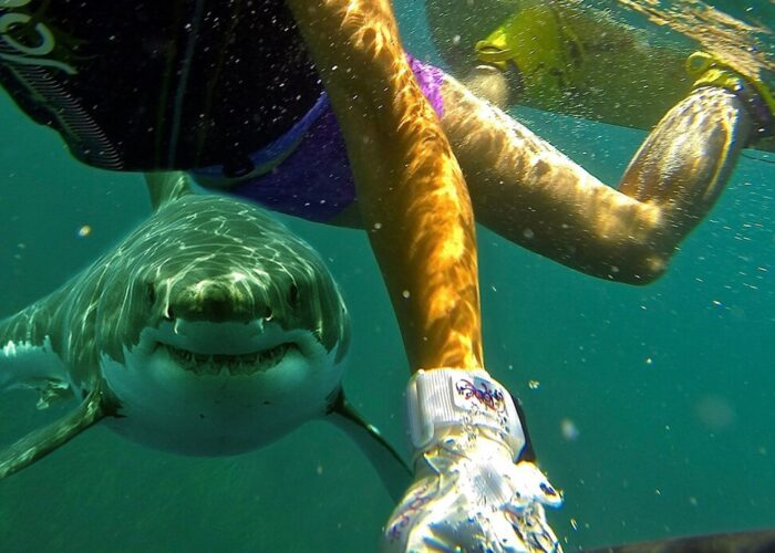 Swimming with a shark.