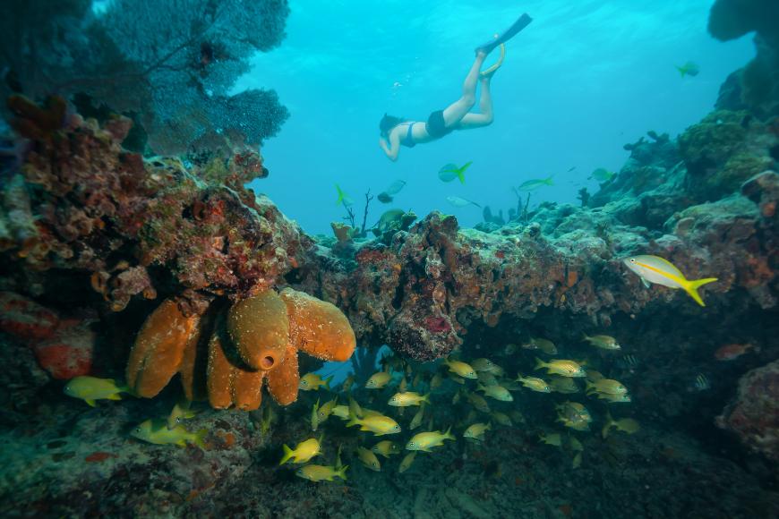woman snorkeling in keys coral reef florida