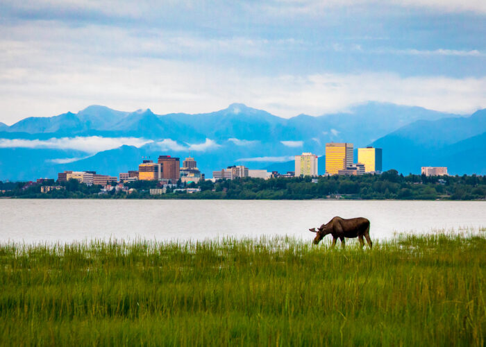 Anchorage Alaska skyline and moose.