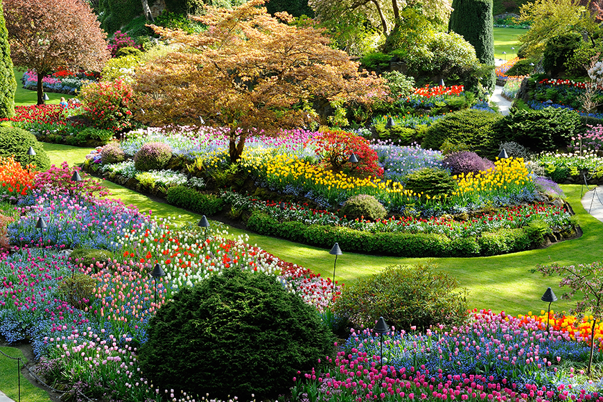 butchart gardens victoria in spring.