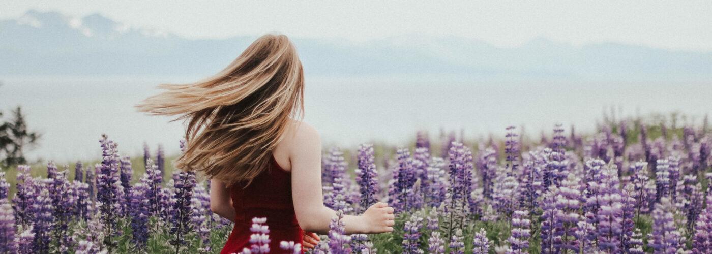 Lupine flowers in Alaska.