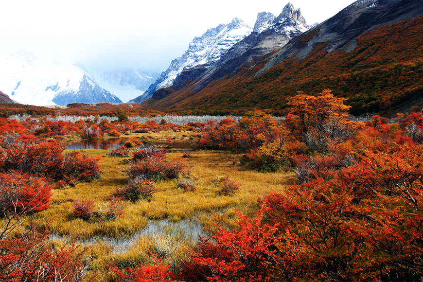 fall foliage in patagonia.