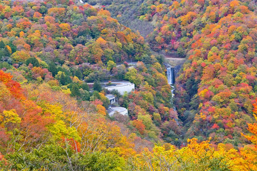 fall foliage in nikko, japan.