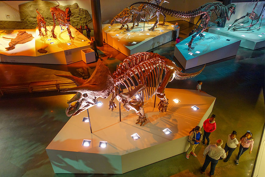 dinosaur skeletons at houston museum of natural science.