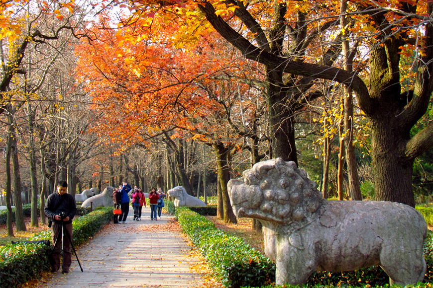 fall foliage in nanjing, china.