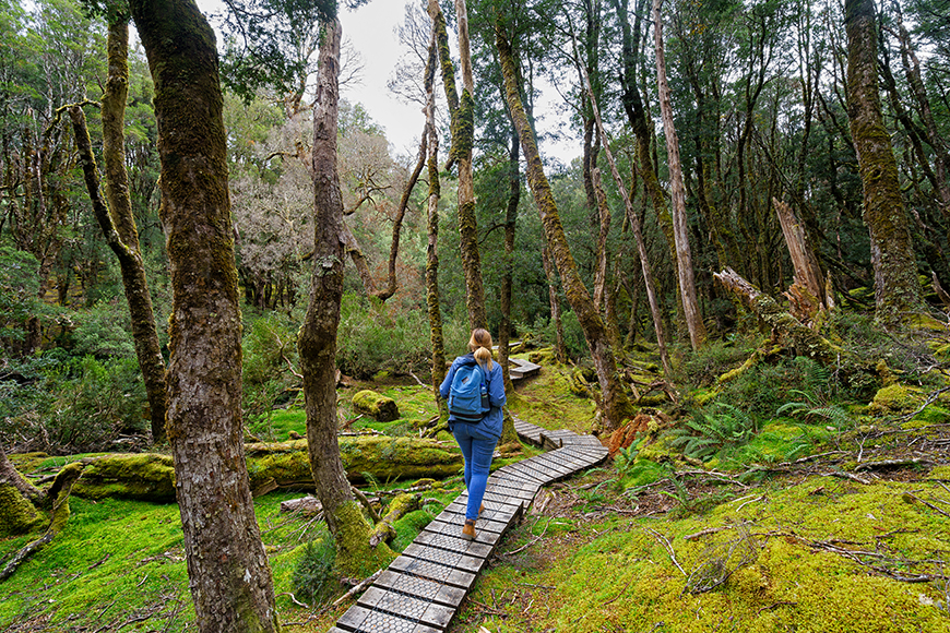 hiker on boardwalk trail cradle mountain lake st clair national park.