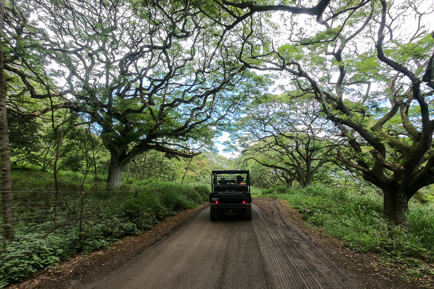 jeep ride over tropical forest in Hawaii
