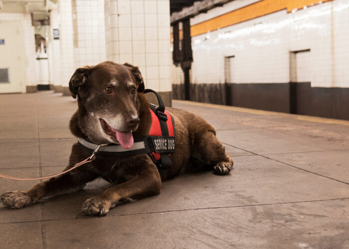service dog on subway platform.