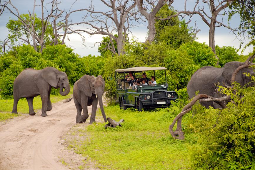 :Tourists on safari game drive in Botswana