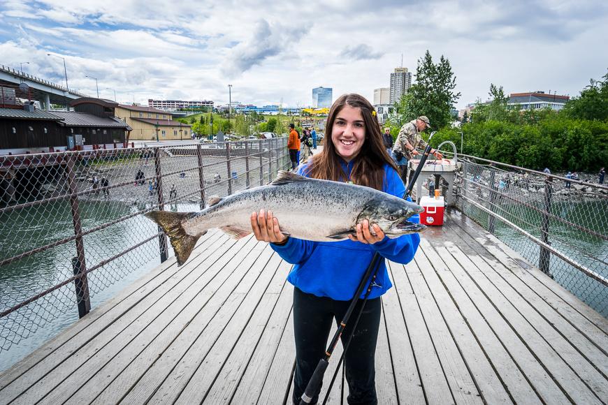 Hauling in salmon at Anchorage's urban salmon Fishery, Ship Creek in Anchorage, Alaska.