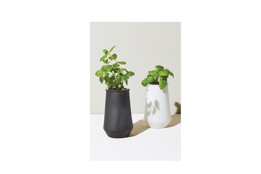 Basil grow kit.