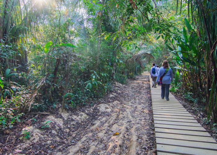 hikers in amazon rainforest.