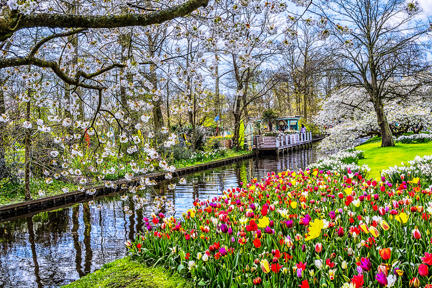 Keukenhof park of flowers and tulips in the Netherlands.