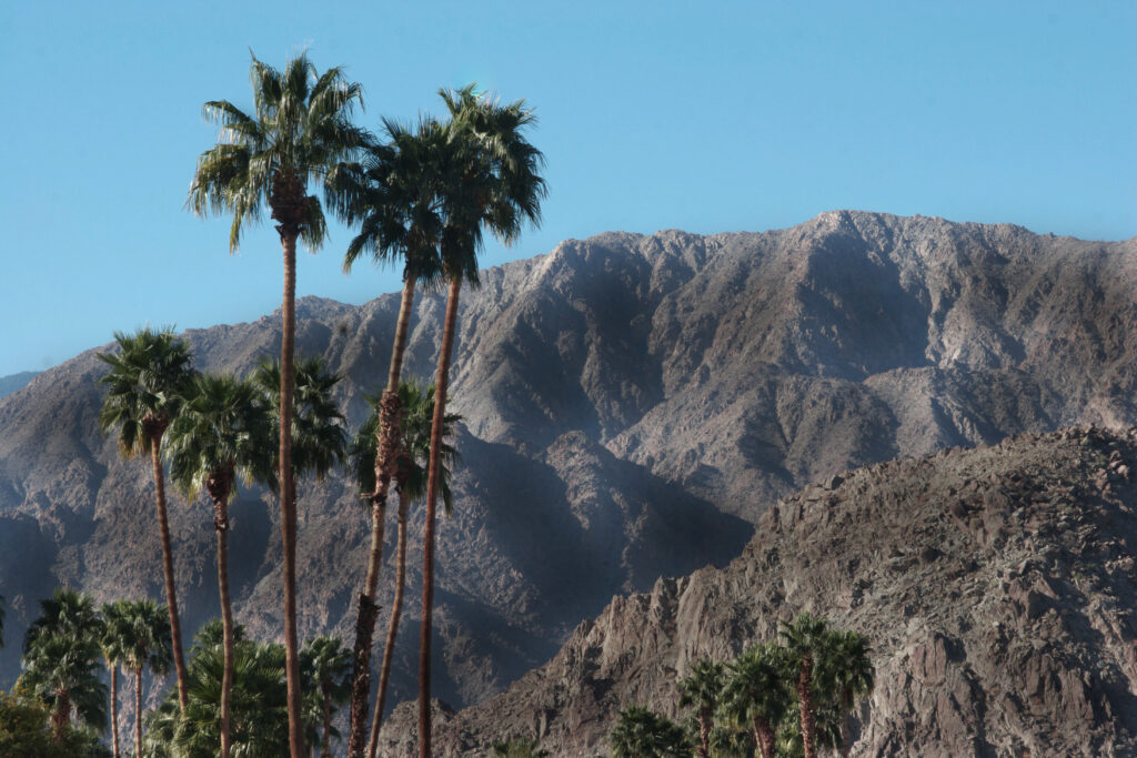 palm trees in palm springs desert