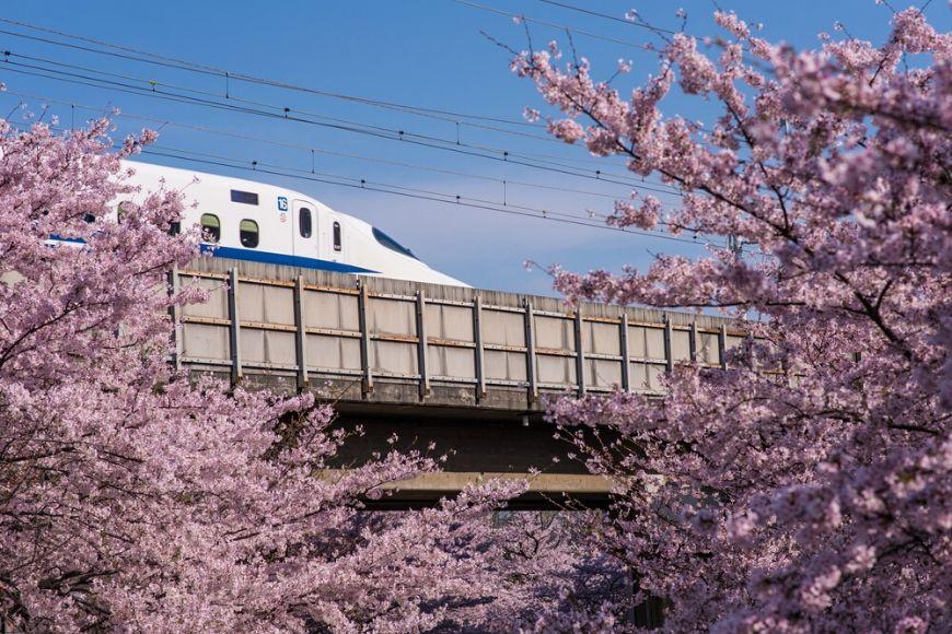 cherry blossom japan bullet train.