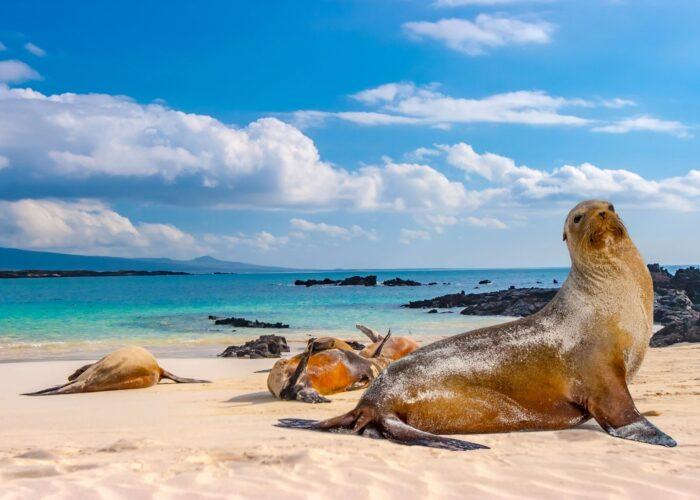 ecuador galapagos islands seal.