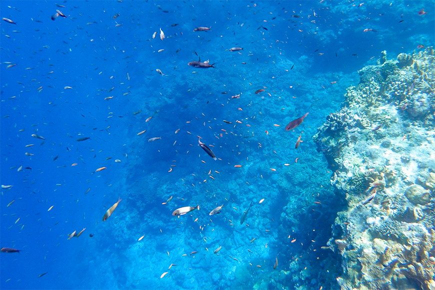 swimming with fish scuba diving