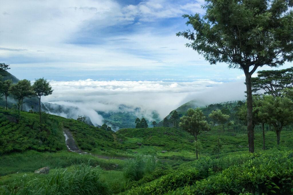 Haputale tea country Sri Lanka.