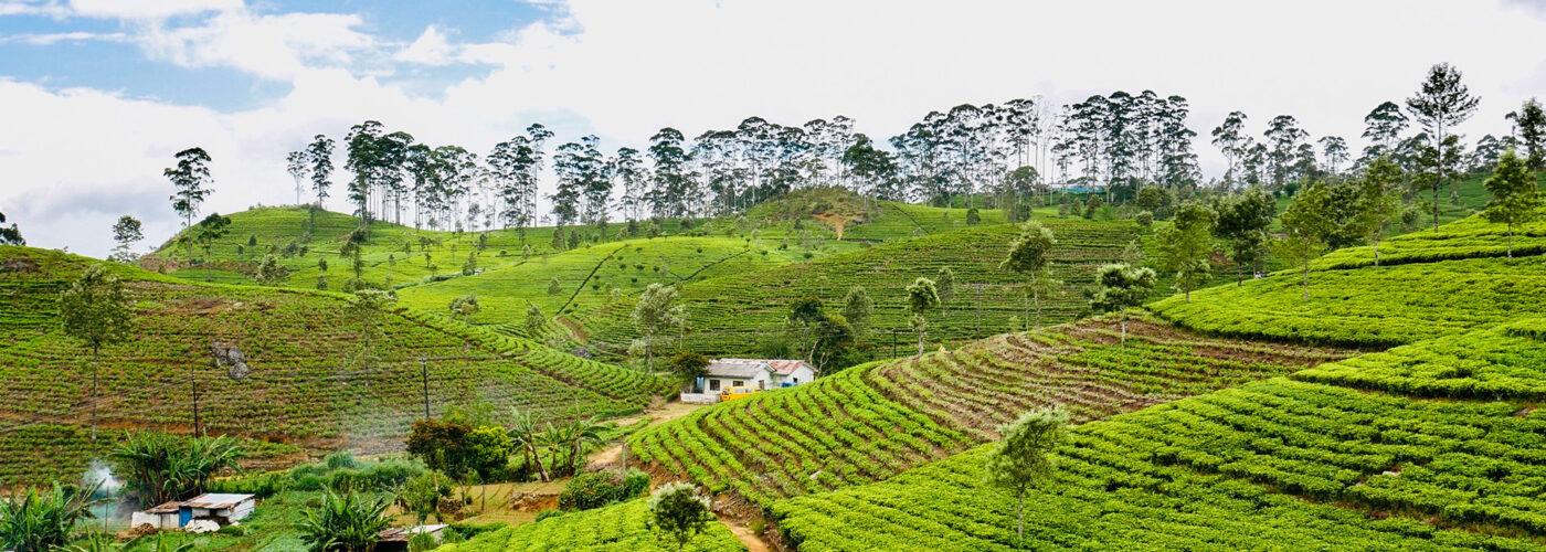 Haputale Tea Country Sri Lanka