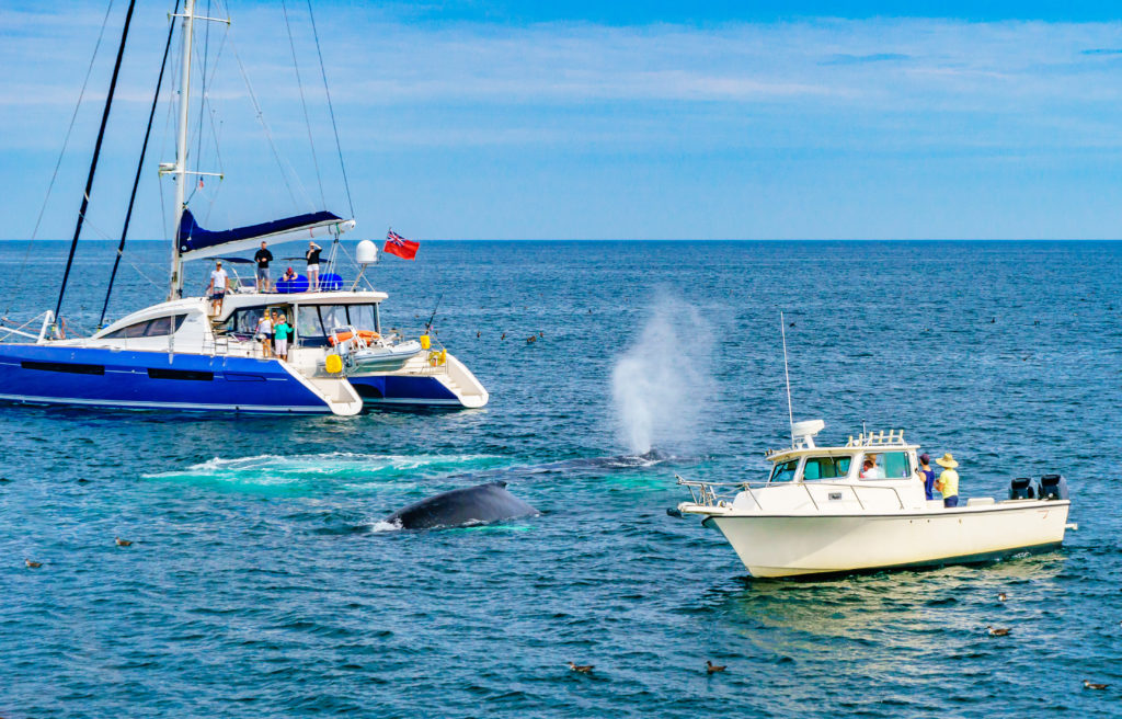Whale breaching between two boats off the coast of Provincetown, Massachusetts