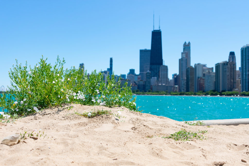 North Avenue Beach with Chicago Skyline in Background