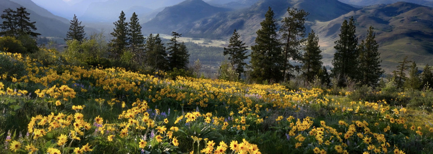 Wildflowers at North Cascades National Park